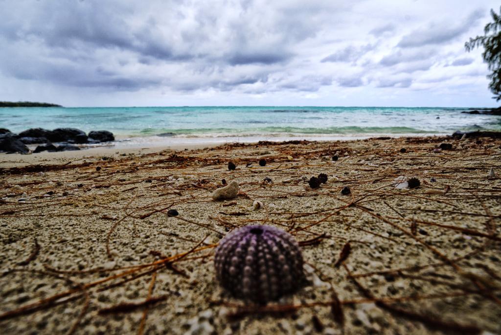 spiaggia Ile aux Cerfs