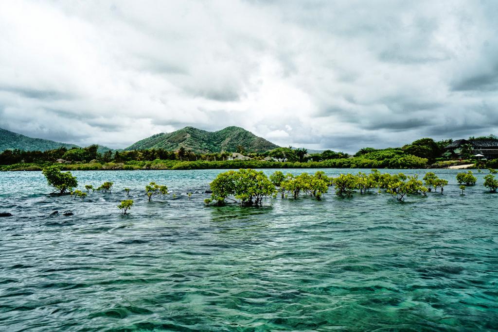 mangrovie mauritius