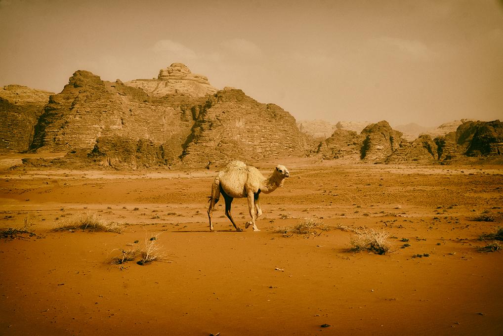 wadi rum escursione